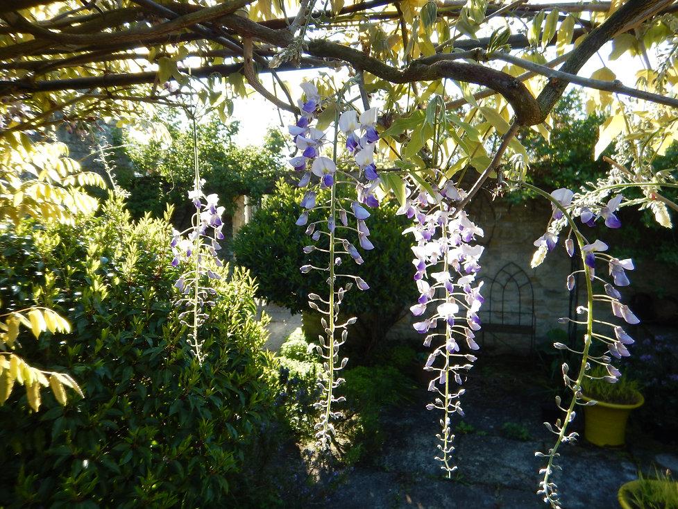 Tania Compton Garden