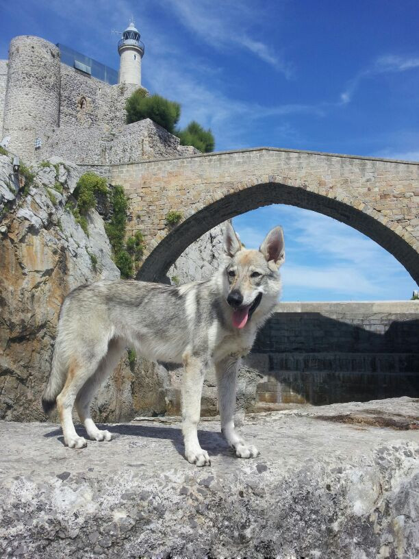 Berska Lobo de la Farola