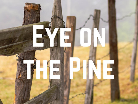 Eye On the Pine