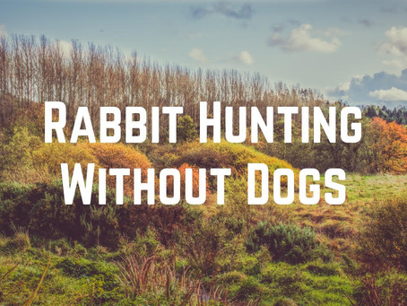 Rabbit Hunting Without Dogs