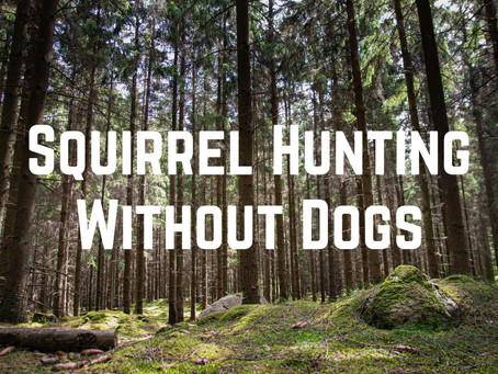 How to Hunt Squirrel Without A Dog