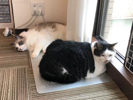 猫ちゃん3匹の往診