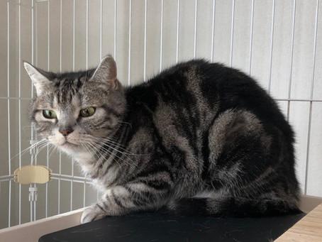 猫ちゃんの在宅治療&通院補助