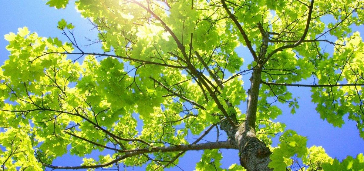 arbre-été.jpg