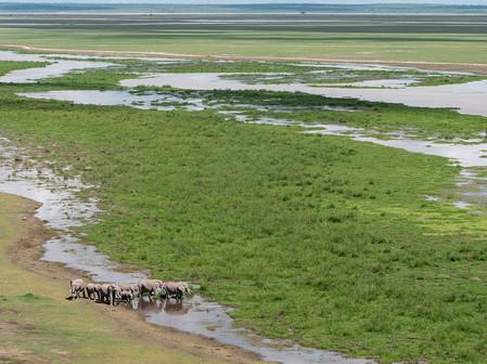 Elephants in the Amboseli National Park.