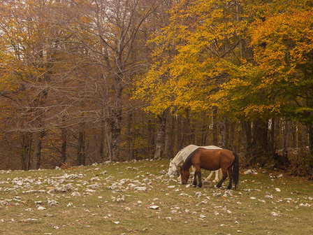 Horses graze in the wild on the uplands of Monti Simbruini, central Italy.