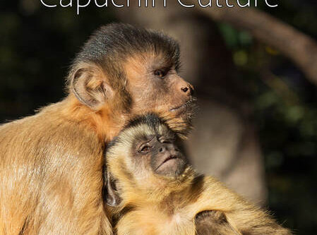 ​Capuchin Culture is a finalist at the International Wildlife Film Festival!