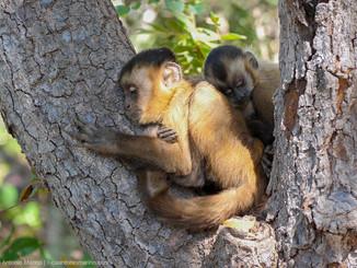 sleeping-monkeys-luca-antonio-marino_ori