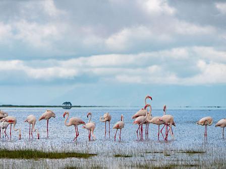 Flamingos in the Amboseli National Park.