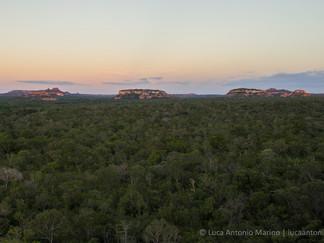 brazilian-forest_orig.jpg