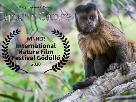 Capuchin Culture - Best Nature Short Film at the International Nature Film Festival!