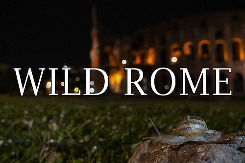 Wild Rome 43.jpg