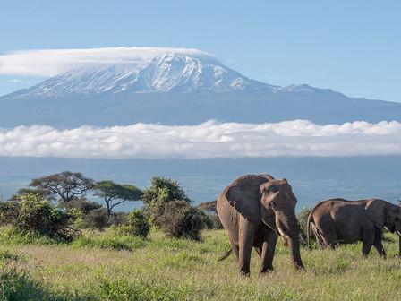 Elephants and the Kilimanjaro, Amboseli National Park.
