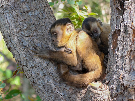 A mother and her baby spleeping on a tree.