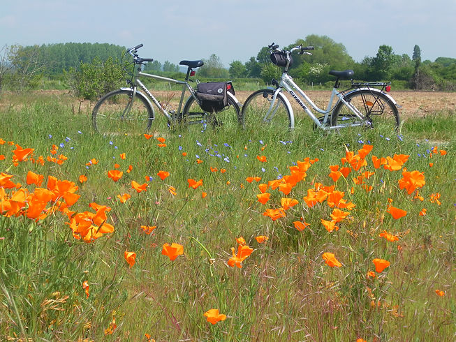 loire valley cycling 5.JPG