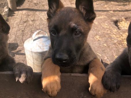 Puppies - Puppies- Puppies