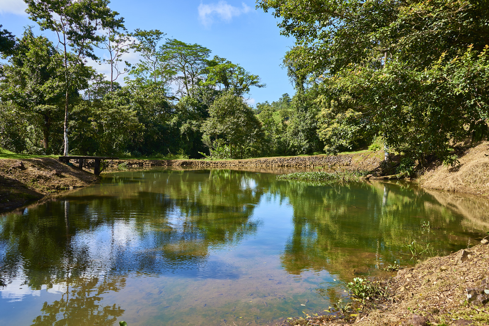 Pond at Finca Experimental Cata
