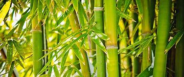 1-bamboo-forest-chinaface.jpeg