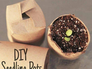 DIY Seedling Pots!