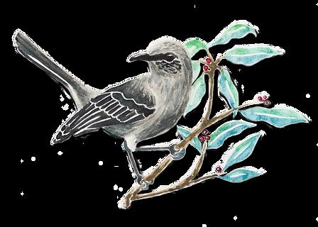 mockingbird2.png