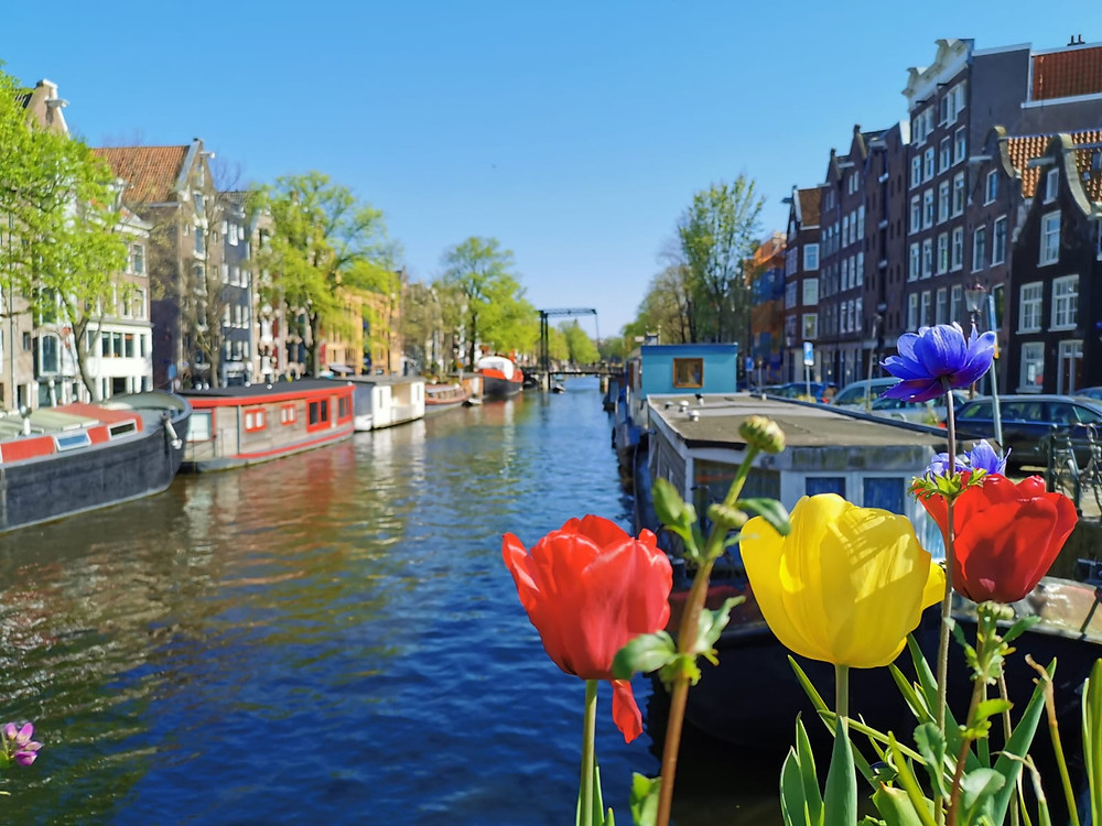 Tulips-canals-houseboats-Amsterdam