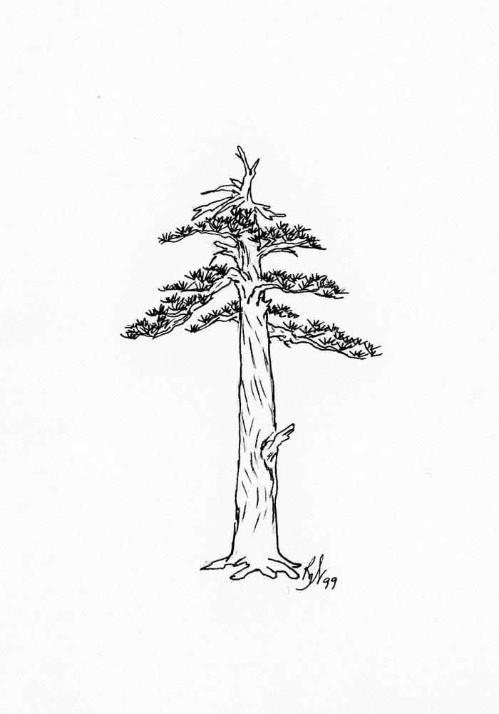 Roberta Walters Drawings a 700x1000