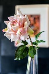 Blumen_Krille-48.jpg