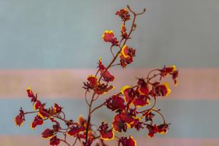 Blumen_Krille-49.jpg