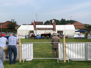 Hereford Society National Breed Show