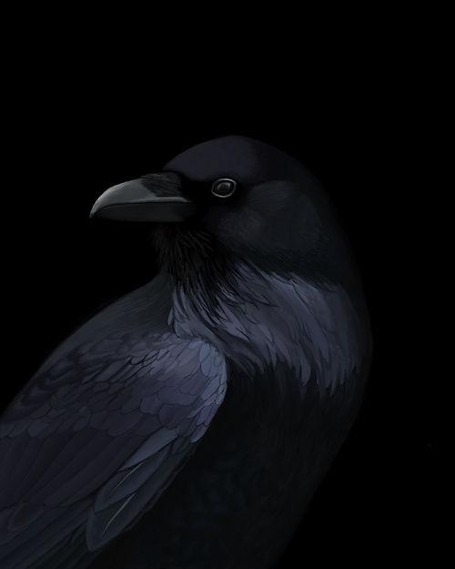 Crow Final.JPG