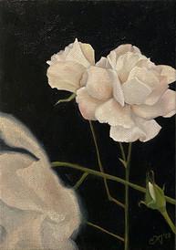 White Rose.jpg