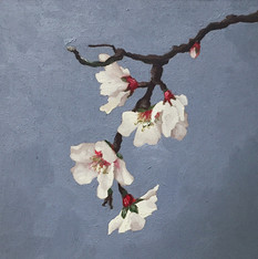 Almond Blossom.JPG