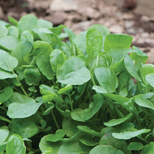 Upland Cress (seed packets)