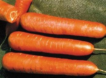 Nantes, Organic Carrot.jpg