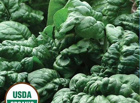 Bloomsdale Spinach.jpg