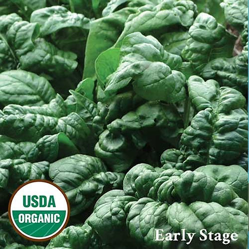 Bloomsdale Spinach (seed packet)