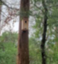 Screech Owl House installed, February 18