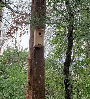 Screech Owl House installed, February 18