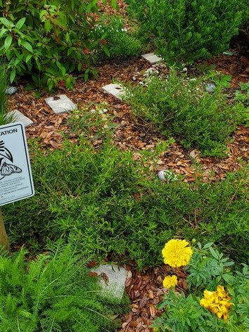 Monarch Waystation sign surrounded by  p