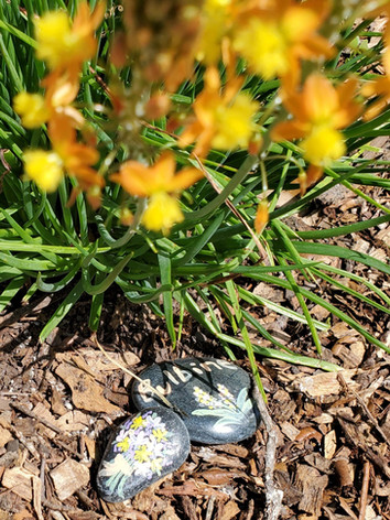 Bulbine blossoms and painted rocks.jpg