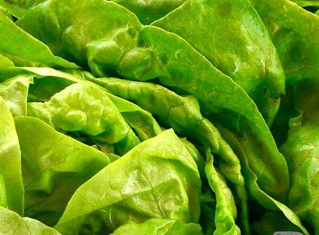 Buttercrunch Lettuce.jpg