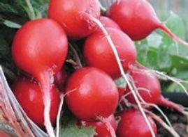 Cherry Belle Radish.jpg