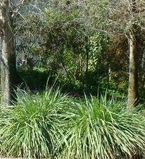 Fakahatchee Grass.jpg