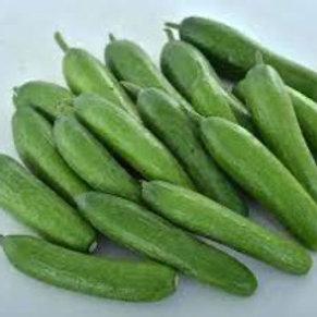Green Light Cucumber (seed packet)