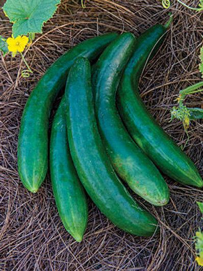 Summer Dance Hybrid Cucumber (seed packet)