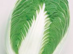 Image Chinese cabbage, Blues.jpg