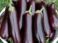 Diamond-Eggplant.jpg
