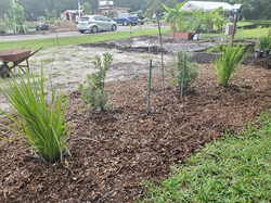 Phase One - Center plantings installed