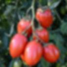 granadero f1.jpg