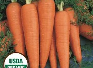 Organic Danvers Carrot.jpg